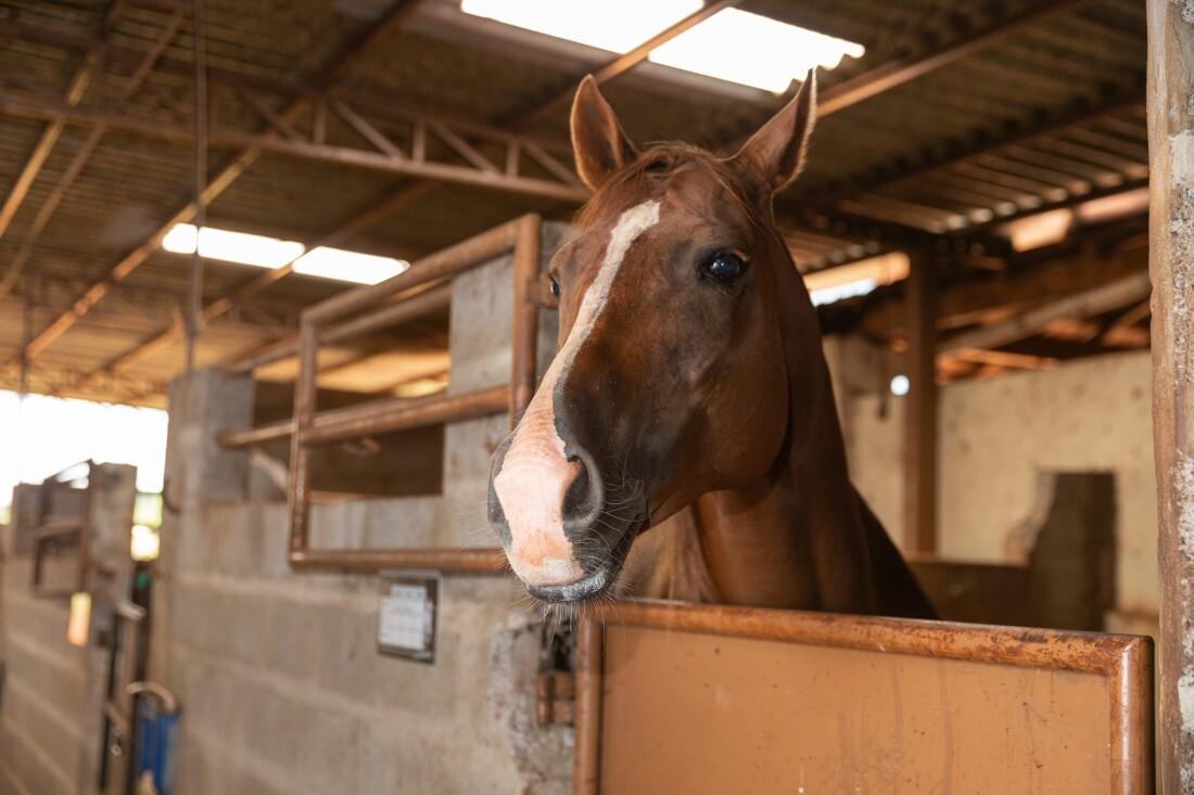 Horse Boarded in Stable